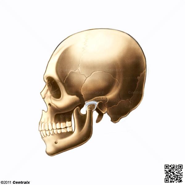 Disque de l'articulation temporomandibulaire