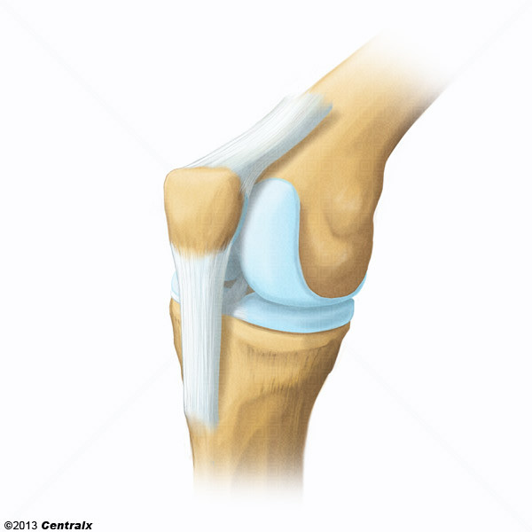 Ligament patellaire