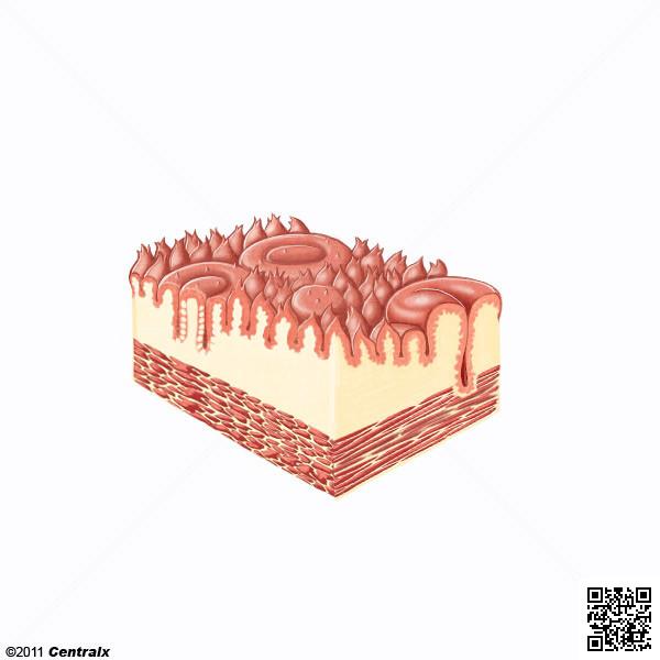 Calicules gustatifs