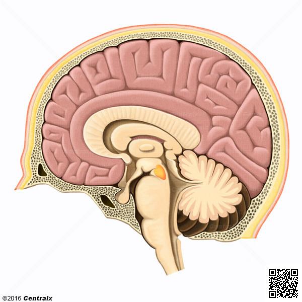Aire tegmentale ventrale