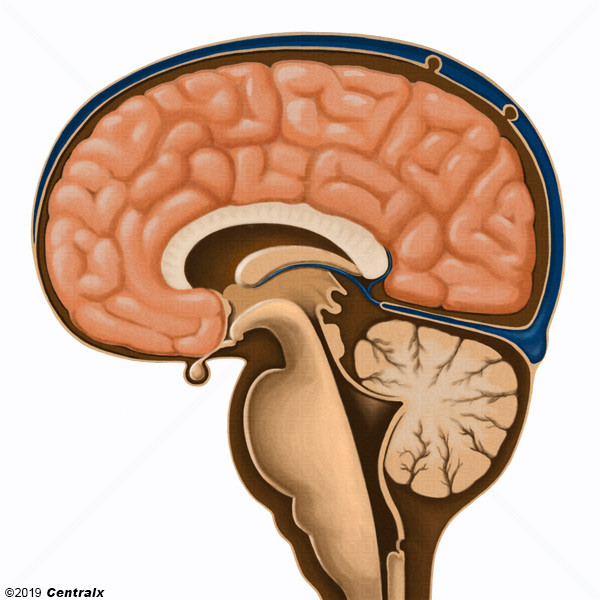 Citerne cérébellomédullaire postérieure