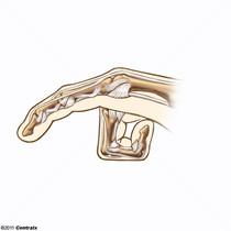 Articulation du doigt