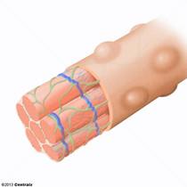 Réticulum sarcoplasmique