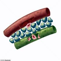Liquides et sécrétions biologiques