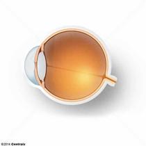 Chambre antérieure du bulbe de l'oeil