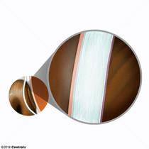 Épithélium antérieur de la cornée