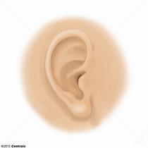 Auricule de l'oreille