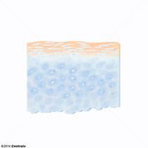 Tissu élastique