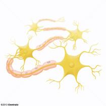 Tissu nerveux